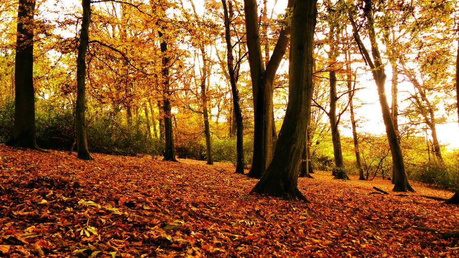 Autumn by Darkdragon15