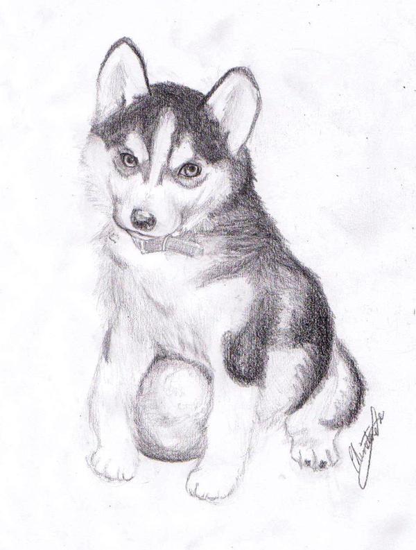 Cute Husky Drawing Husky pup by crimsonlily434Cute Husky Puppy Drawings