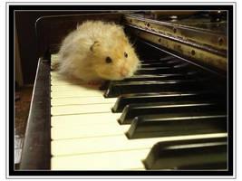 Hamster on Piano by Im4gineTheM4gic