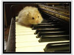 Hamster on Piano