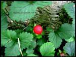 strange little strawberry