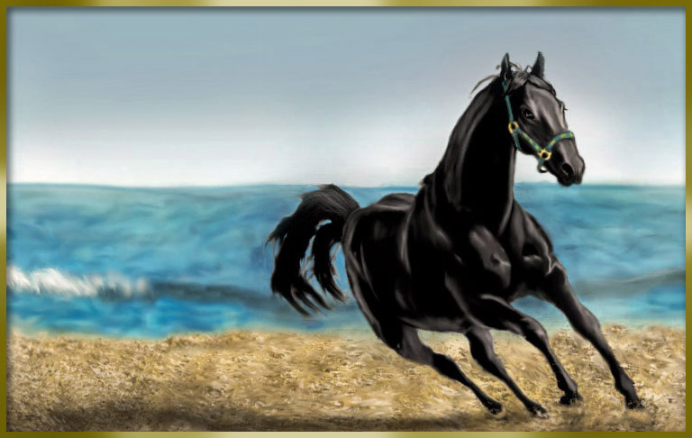black stallion by selket47 -#main
