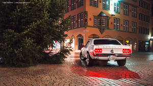 Winter Mustang
