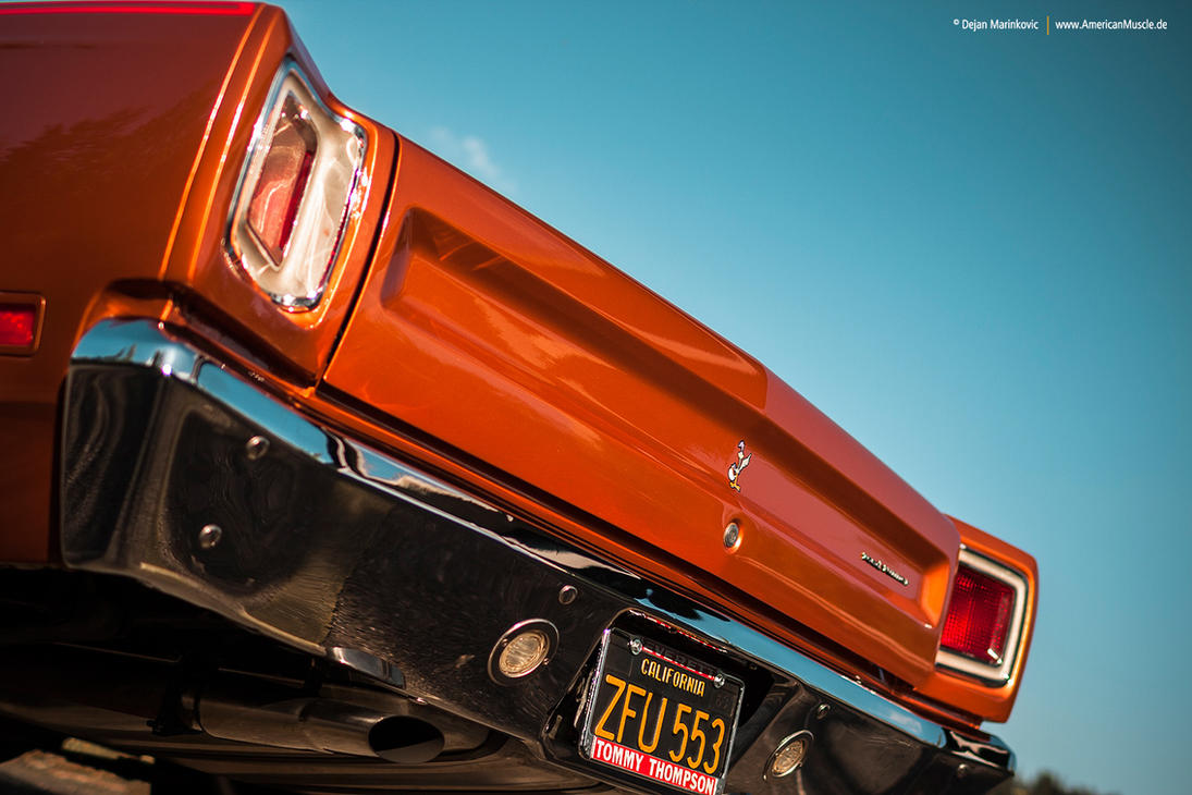 Road Runner Rear by AmericanMuscle