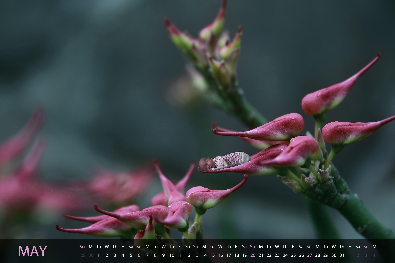 http://fc06.deviantart.net/fs70/f/2012/017/4/2/calendar_2012___may_by_dafne_1337art-d4mnbry.jpg