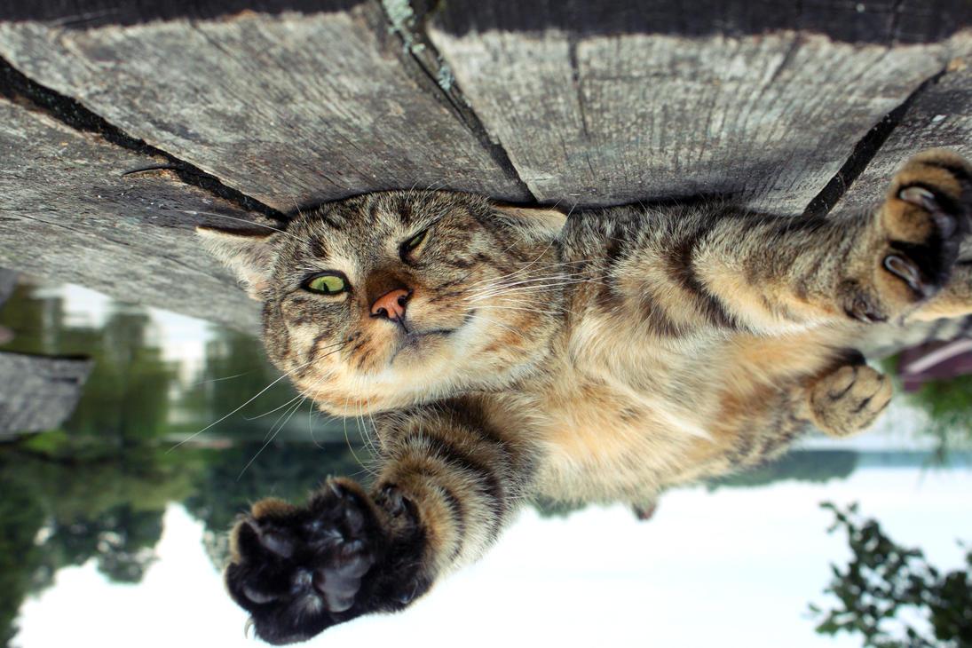 [Image: kitty__upside_down_by_dafne_1337art-d4noul2.jpg]