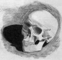Skull by Beatfox