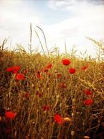In Flander's Fields by imaginative-soul