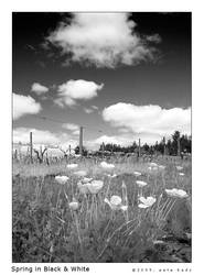 Spring in Black n White by indi-is-conan