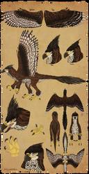[c] Raptor Species by Cassdoodles
