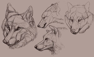 Wolf Studies by Cassdoodles