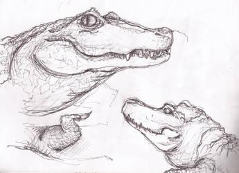 sketch aligators