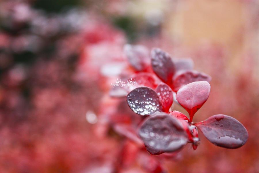 Red by dekorAdum