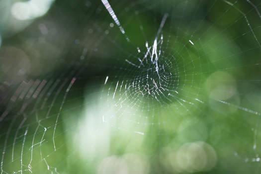 Spider's Artwork