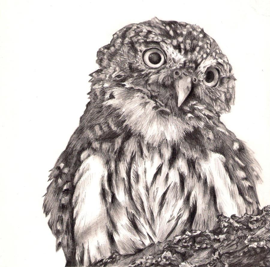 Owl O.O by zenshinibuu