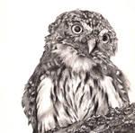 Owl O.O