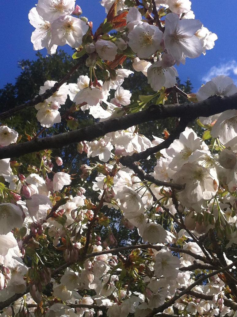 Blossom by Darkstorm64