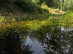 small shallow pond