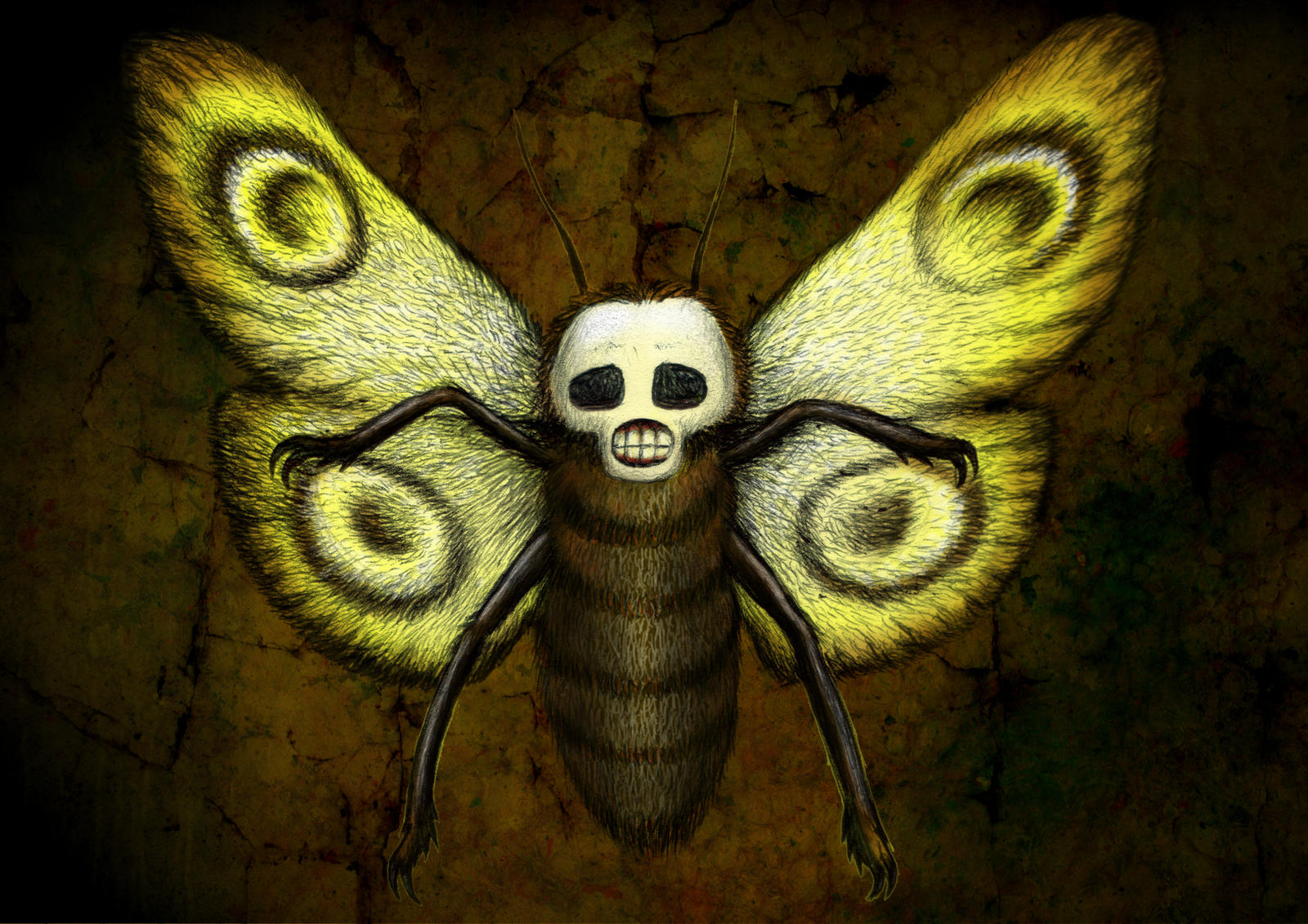 Skull Moth by beanarts