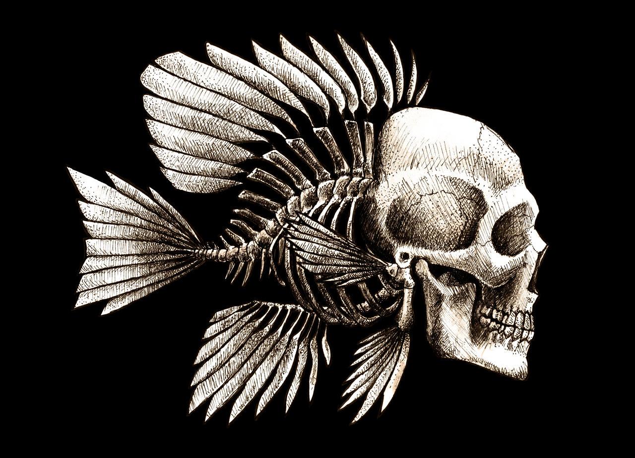 fish skull design by beanarts on deviantart. Black Bedroom Furniture Sets. Home Design Ideas