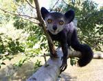 Aye-Aye (Lemur), needle felted Sculpture