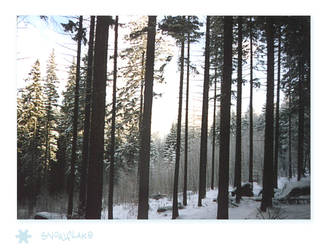 SnowFlake Trees by reticulum