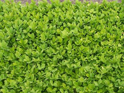 Leaf texture 2