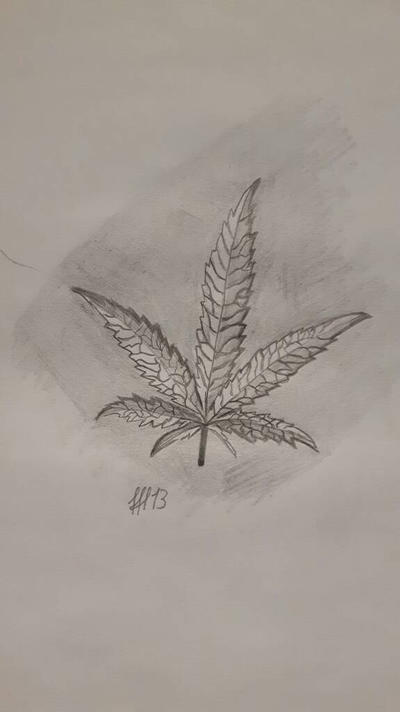 weed leaf old stuff  drawing