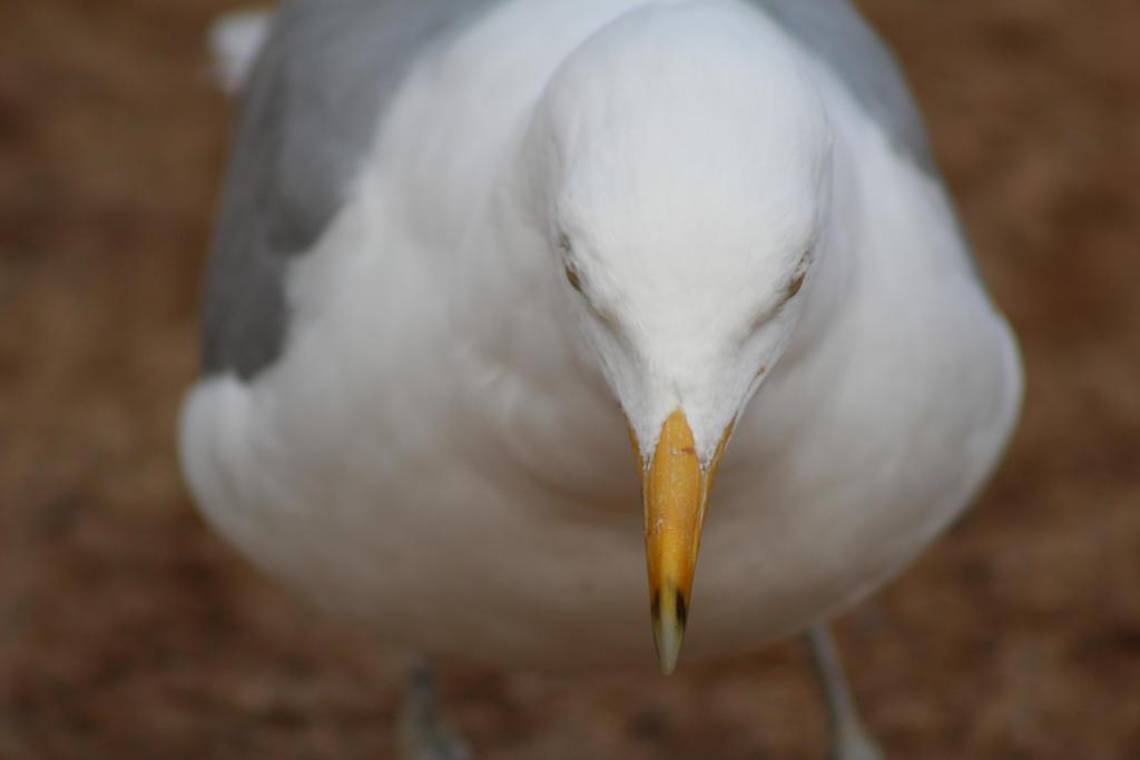 Beak by ADU101