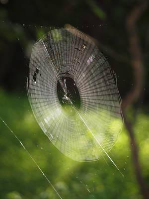 Spiderweb by KandusJohnson