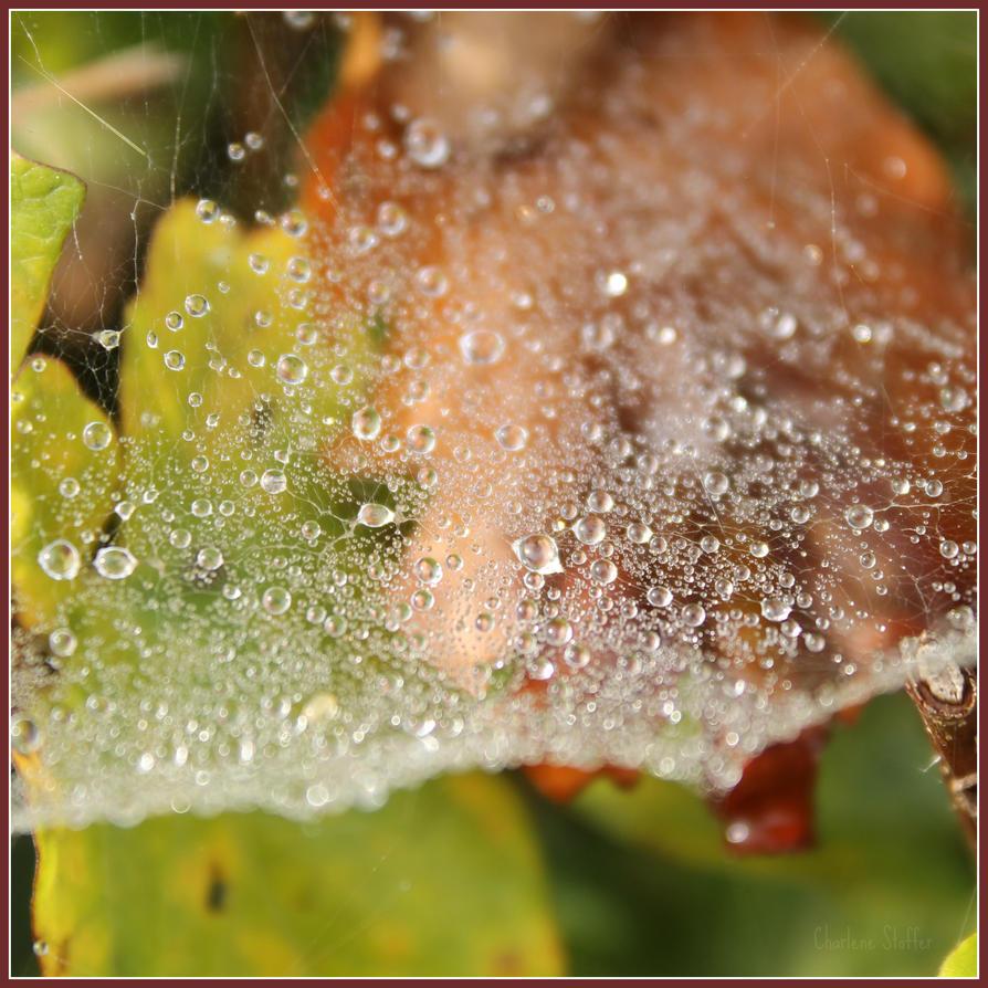 Dewdrops by Seqbre