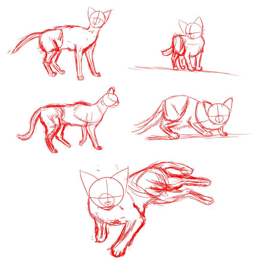Cat Anatomy by Prawes on DeviantArt