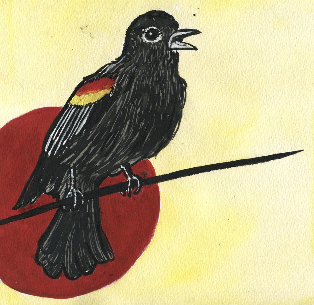 Red Winged Blackbird Art