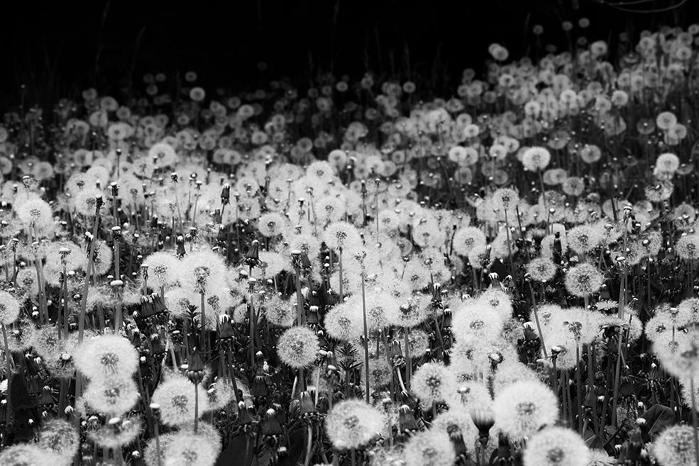 Fotografija dana Thousand_wishes_for_you____by_bluystardust-d7g1ny7