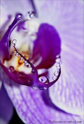 orchidea by maltissimo