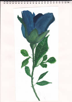 Blue Tulip using water colours
