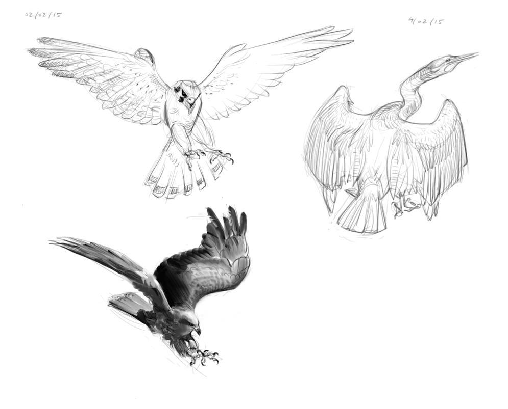 Oiseaux1 by ViridRain