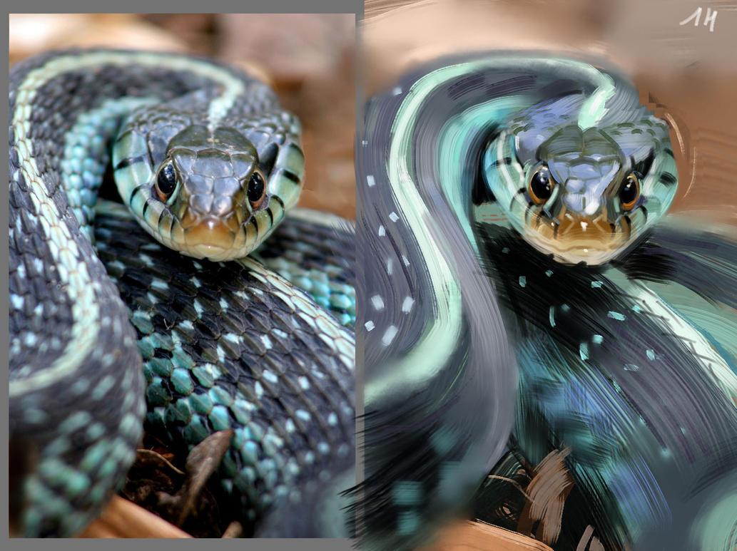 Snake study by ViridRain