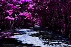 Violet Pathway by pendragon93