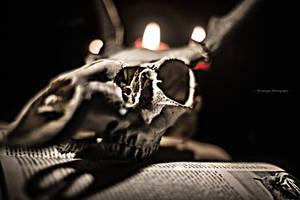 Bone Digity 4 by pendragon93