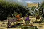 Imaginarium 14 : Salt cane fields