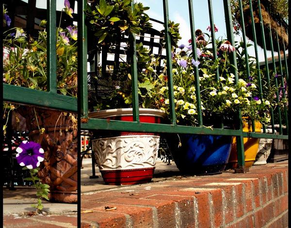 main street flora by gwumpysmurf
