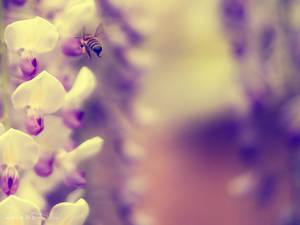 Bee Deal