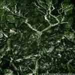 Dark Forest Oak Metal Extreme Metal Cover Album CD