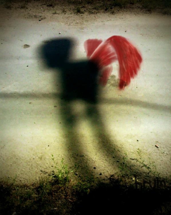 shadow wings by hrum