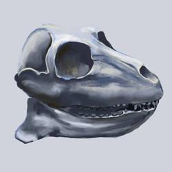 skull by hrum