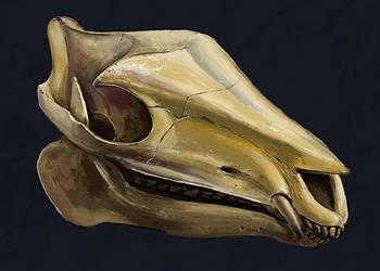 not a horse skull