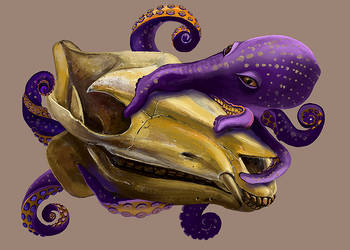 octopus on the skull by hrum