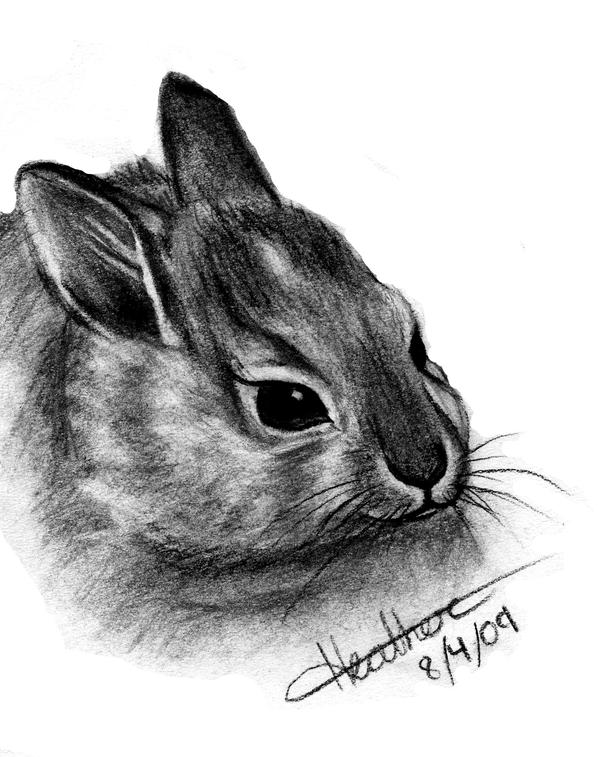 Realistic Bunny by TropicalDreamx on DeviantArt
