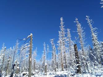 Winter sky by bormolino